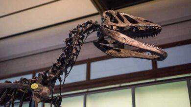 Photo of علماء بلجيكيون يكتشفون إصابة الديناصورات بمرض السرطان