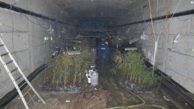 Photo of إكتشاف مزرعة للقنب داخل جسر في فلاندرز الغربية