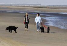 Photo of تعميم إلزامية إرتداء قناع الفم على شواطئ الساحل البلجيكي